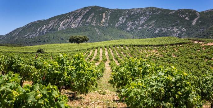 Wijngaard in Portugal